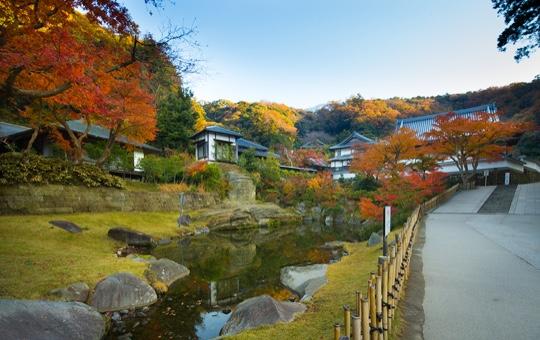 MYOKO-Chi(pond)